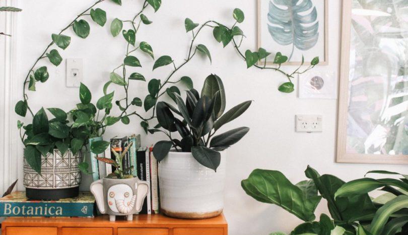 Personliga affischer och vackra motiv är perfekta för hemmets väggar