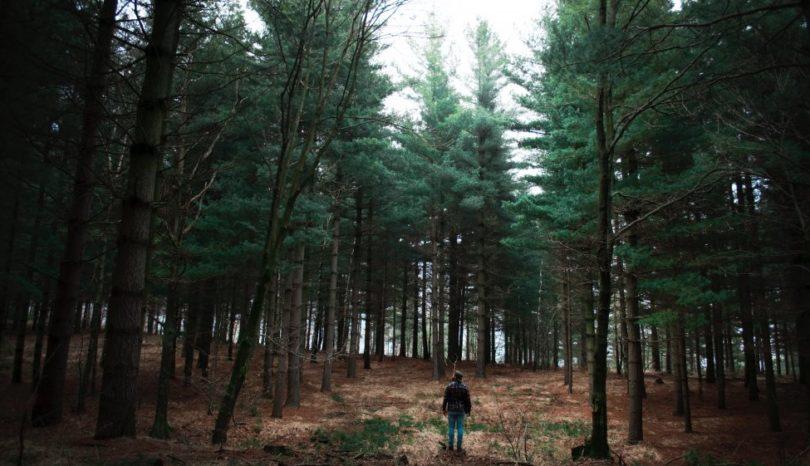 Att anlita någon för trädfällning i Norrtälje